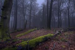 Naturwald im Herbstnebel (doerrebachtaler) Tags: katzenkopf soonwald naturreservat buche buchenwald baumpilz nebel hunsrück seibersbach schanzerkopf hochsteinchen