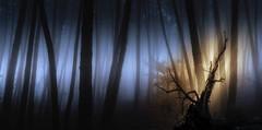 Monte Beiro (Noel F.) Tags: sony a7r a7rii ii fe 24105 monte beiro valga galiza galicia neboa fog mist