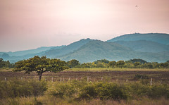 (Isai Hernandez) Tags: landscape places paisaje goldenhours tree mountain blue green sky photography photoshooting nikon nicaragua nice flickr photooftheday naturephotography peace фотография пейзаж никон фото натуральный