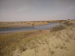 Por la cuenca del Deriya. Desierto de Taklamakán. China (escandio) Tags: rio taklamakan keriya china2018 china 2018 3 xinqian