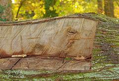 Au bout d'un moment, on a les fesses au carré - After a while, we have the buttocks squared (p.franche On - Off) Tags: tronc banc bois découpé écorce recyclage nature parc veines mousse vert texture trunk bench wood carved bark recycling park veins moss green macro bokeh sony sonyalpha65 dxo photolab bruxelles brussel brussels belgium belgique belgïe europe pfranche pascalfranche schaerbeek schaarbeek parcjosaphat josaphatpark closeup tree baum 樹 trae árbol δέντρο fa albero ツリー treet drzewo дерево ต้นไม้