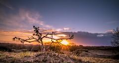 20190114-0907-23 (Don Oppedijk) Tags: amsterdamsewaterleidingduinen awd hawthorn meidoorn dunes duinen sunrise panneland cffaa