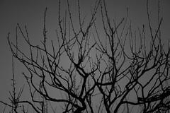 L1100902-2 (Zengame) Tags: kameidotenjin leica leicasl leicasltyp601 sl summilux summiluxsl50mmf14asph japan kameido tokyo typ601 ズミルックス ズミルックスsl ライカ 亀戸 亀戸天神 日本 東京 東京都 jp