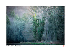 On East Dean Hill (Chalky666) Tags: tree trees wood woodland forest southdowns westsussex painterly landscape art winter
