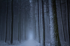 Fairytales of winter (Petr Sýkora) Tags: les sníh zima nature winter snow trees forest