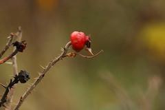 IMG_5044 (monika.carrie) Tags: monikacarrie wildlife scotland aberdeen
