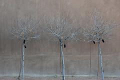 trees (remiklitsch) Tags: color texture utah nikon remiklitsch november 2018 amangiri trees wind