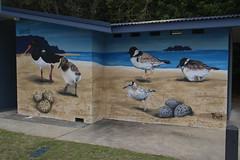 Lake Conjola (RossCunningham183) Tags: lakeconjola nsw australia birds piedoystercatcher chicks hoodedplover mural trait