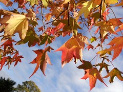 Autumn at Aston Park (Manoo Mistry) Tags: autumn leaf leaves autumnleaves autumnflare ztemobile