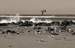 Cold winds (Behappyaveiro) Tags: espinhobeach aveiro portugal praia gaivotas seagulls europa espinho europe beach monocromático monochrome
