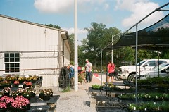 452955590029_29A (acylay) Tags: 35mm 35mmfilm filmphotography analog greenhouse horticulture plants