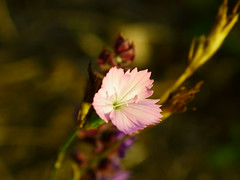 Осени букет / Autumn bouquet (Владимир-61) Tags: осень октябрь природа цветы цветение роща autumn october nature flower bloom grove sony ilca68 minolta28135