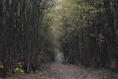 The woods at Westwood. (stevencarruthers93) Tags: wigan wiganflashes nature wildlife autumnwatch greenheart photography springwatch naturephotography wildlifephotography