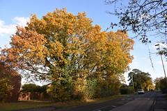 DSC_2244 (PeaTJay) Tags: nikond750 reading lowerearley berkshire gardens outdoors flora fauna plants flowers trees bushes