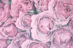 Roses (Anikó Lázár) Tags: smileonsaturday natureisanartist rose pink macro filltheframe petals leaves waterdrops