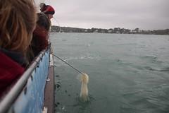Plastic pollution retrieval 1 (MarBio Abbie) Tags: plastic microplastic trawl marine biology marinebiology stem science boat sea estuary plankton fieldwork pollution beachcleanproject