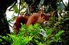Esquilo (verridário) Tags: esquilo sony natura nature animal wiewiórka белка scoiattolo eichhörnchen 松鼠 écureuil ardilla squirrel リス