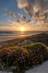 A stunning sunset on the West Coast of South Africa - Christine Phillips (Christine's Phillips (Christine's observations) - ) Tags: green southafrica sunset yzerfontein fynbos dramatic vertical christinephillips pinkflowers bush people family sunrise seascape reflections peaceful tranquil