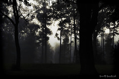 Cool Morning Fog (Scott Sanford Photography) Tags: 6d canon ef50mmf14 eos fog morning naturalbeauty naturallight nature outdoor texas topazlabs mist trees