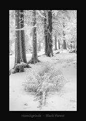 Hornisgrinde (MC--80) Tags: hornisgrinde black forest schwarzwald