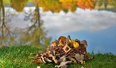 Grazie Autunno (maurizio.pretto) Tags: autunno autumn foglie funghi mele uva mushrooms apples stagione season colors colori montagna mountains