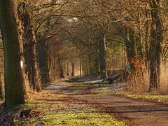 shades of winter (JoannaRB2009) Tags: miliczponds lowersilesia dolnyśląsk polska poland nature tree trees path road oak oaks alley avenue winter sunny landscape view dolinabaryczy