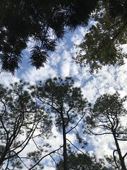 Tree sky (光輝蘇) Tags: 清華大學28 blue morning sky tree kk