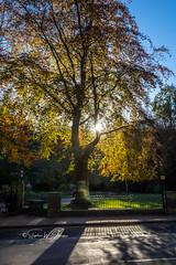 SJ1_3231 - Parklife... (SWJuk) Tags: hebdenbridge england unitedkingdom swjuk uk gb britain yorkshire westyorkshire calderdale parkland park tree leaves foliage light sunlight shadows sky bluesky sun road 2018 oct2018 autumn autumnal autumncolours nikon d7200 nikond7200 nikkor1755mmf28 rawnef lightroomclassiccc