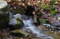 Flow of time (Baubec Izzet) Tags: baubecizzet pentax nature autumn leaves water