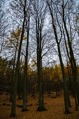 Autumn (Rudi Pauwels) Tags: sverige sweden schweden goteborg gothenburg hisingen lundby ramberget rambergstaden trees autumn fall autumncolors bigtrees tamron 18270mm tamron18270mm nikon d7100 nikond7100