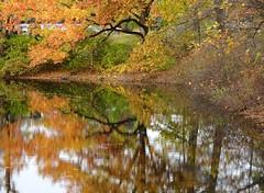 DSC05317b (Naturecamhd) Tags: dschx90v hx90v newyorkbotanicalgarden nybg botanicalgarden nature bronx green eco sonyhx90v thebronx sonydschx90v fall fallfoliage autumn forest fallcolors autumnleaves twinlakes