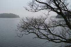 Saturday at the lake (thor_thomsen) Tags: storestokkavannet stavanger norway landscape fog forest lake tree monochrome nature