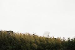 20190203-02-402451_000012 (u2penguin) Tags: pentaxlx pentax lx 50mm agfa vista agfavista agfavista400 iso400 richo xr rikenon richoxrrikenon50mmf2 film filmphotography 35mm 35mmfilm analogphotography analog agfavistaplus400