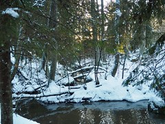 The stream in the middle of the forest (sonjawitting) Tags: sunlight nordicwinter nordicnature nordicbeauty winterforest winterlandscape winterwonderland reflections waterstream forest finland landscapephotography astoundingimage