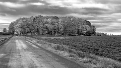 Route du Mitan en automne, Île d'Orléans, Québec, Canada (Agirard) Tags: fall mitan road orleans island quebec canada forest trees logs field loxia loxia50 250 250mm zeiss sony a7ii landscape bw nb blackwhite noirblanc