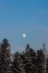 Daymoon (PetuPictures) Tags: nature naturephotography pentax sigma winter snow finland