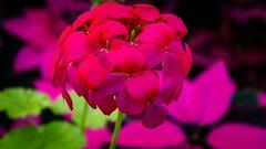 A flower blossoms for its own joy. Oscar Wilde #artistry_flair #fx_hdr #iseriesart #mode_emotive #ethereal_moods #rebel_artandedits #igartistry #tmoosouls #creative_moodysquares #edp_arts #theabstractlens #emotional.artistry_ #bpa_arts_member #eg_member # (argyllsockmonkey) Tags: ifttt instagram a flower blossoms for its own joy oscar wilde artistryflair fxhdr iseriesart modeemotive etherealmoods rebelartandedits igartistry tmoosouls creativemoodysquares edparts theabstractlens emotionalartistry bpaartsmember egmember excellentnature bpanature rebelsnature lenslovesnature nbnaturebrilliance hqnature