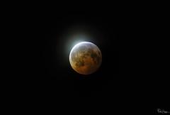 Also Sprach Zarathustra (Karnevil) Tags: usa northcarolina nc raleigh northraleigh wakeforest moon fullmoon waxinggibbous naturalsatellite celestialbody celestial luna lunar eclipse lunareclipse superbloodwolfmoon alsosprachzarathustra 2001aspaceodyssey umbra penumbra antumbra zoomlens 150mm600mm 600mm gen2 tamron sony a7riii a7 riii petekreps