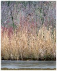 Winter palette (Rob Schop) Tags: gorzen ridderkerk tele winter color ice layers lrcc pola hoyaprofilters sonya6000 sony55210oss rainy woodland