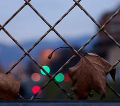 Autumn evening. Bokeh. Turin Italy (giuselogra) Tags: bokeh torino turin piemonte piedmont italia italy colori colors street streetphotography canon200d canonphotos evening