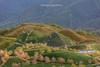 _Y2U3497.1218.Ô Qúy Hồ.Bản Khoang.Sapa.Lào Cai (hoanglongphoto) Tags: asia asian vietnam northvietnam northwestvietnam landscape scenery vietnamlandscape vietnamscenery vietnamscene sapalandscape nature afternoon sunlight hillside flanksmountain trees teahill canon canoneos1dx canonef70200mmf28lisiiusm tâybắc làocai sapa bảnkhoang ôquýhồ phongcảnh phongcảnhsapa buổichiều đồichè sườnđồi sườnnúi cây maianhđào