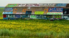 Fleeting graffiti 2009 grad art on the Barn (SpyderMarley) Tags: nikon largebarn yellow greens blues 2009grad studentgradnames ruralsaskatchewan farm barn graffiti colourful canola field grass canada saskatchewan prairie abandoned rural summer town kerrobert graduation grad outdoor spraypaint
