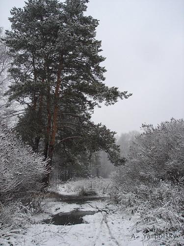 Первый снег в Парке Лесоводов ©  ayampolsky