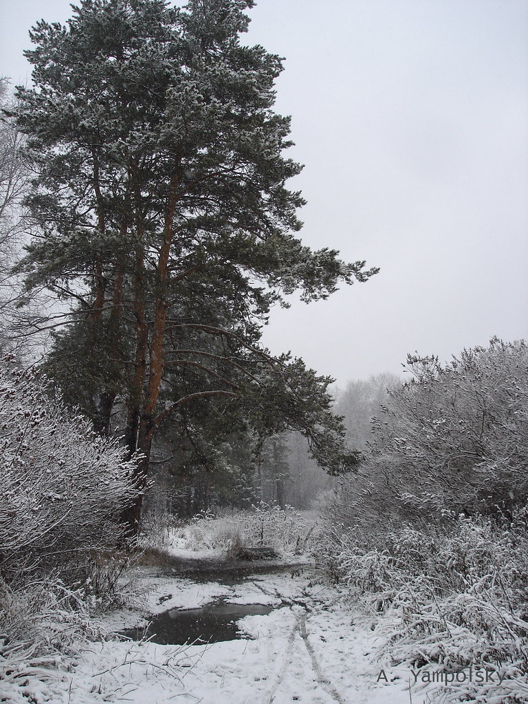 фото: Первый снег в Парке Лесоводов