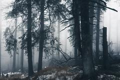 Spooky forest in harzmountains (Gruenewiese86) Tags: 2018 hütte november sony a6500 harz wald forest forestscape fog nebel angst tod tot geheimnisvoll mystisch mystical germany holz baum himmel landstrase