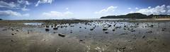 Low Tide, Playa Bonita
