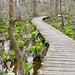 Black Walnut Creek - Patuxent River Park