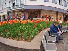 Spring tulips on Simeonstraße - Trier, Rhineland-Palatinate, Germany (edk7) Tags: olympuspenliteepl5 olympus9mm18140°fisheyezonefocusbodycaplens edk7 2015 germany deutschland rhinelandpalatinate rheinlandpfalz moselwineregion moselleweinbaugebiete trier tulipsonsimeonstrase architecture building structure city cityscape urban seat chair pavement pavingstone person people male peakedbaseballhat flower plant garden stone shop store window sign handbag purse publicgardendisplaysadminfave