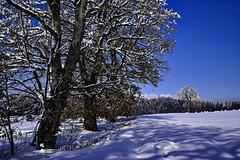 Der Himmel macht die Schatten blau (Helmut Reichelt) Tags: schatten blau licht spuren felder schnee viel sonne winter februar schwaigwall oberbayern bavaria deutschland germany leica leicam typ240 captureone12 dxophotolab leicasummilux50mmf14asph