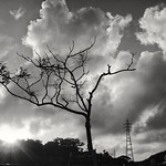 Tree, Tower, Cloud (樹、塔、雲) thumbnail